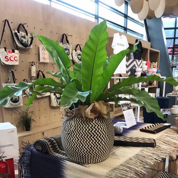 'Pot' Black & White กระถางต้นไม้ จากไผ่ไร่